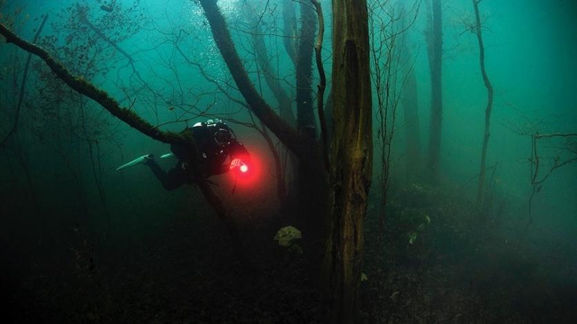Neopisivo osjećaj ronjenja među drvećem u Ponikvama