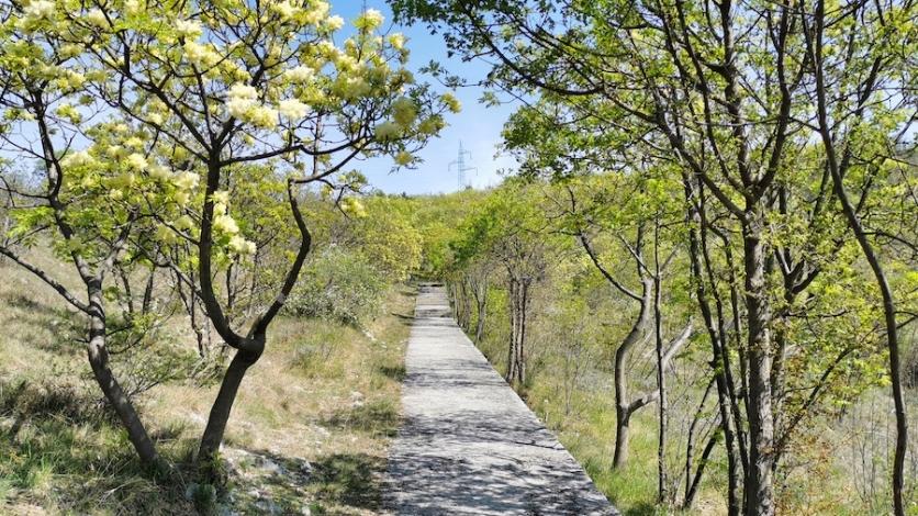 Jeste li znali za predivni Mlikaričin put?