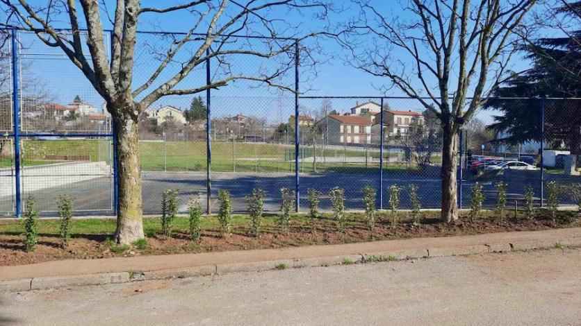 U Kastvu posađeno 90 novih stabala i 60 grmova
