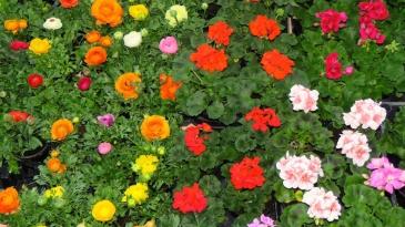 Proljetni sajam cvijeća