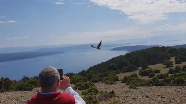 Četiri oporavljena supa vinula se u nebo nad Primorjem