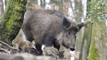 Program zaštite divljači na području Općine Kostrena